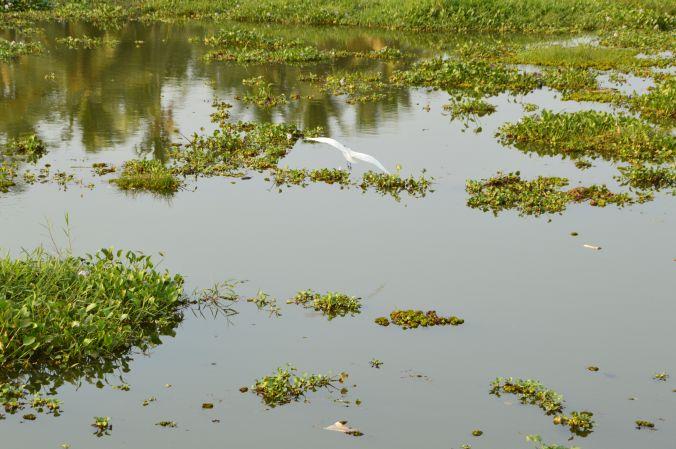 Vögel auf dem Vembanad See