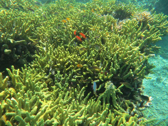 Unterwasserparadies Menjangan