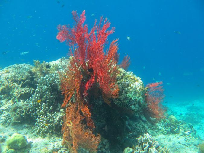 Bunte Korallen auf Menjangan